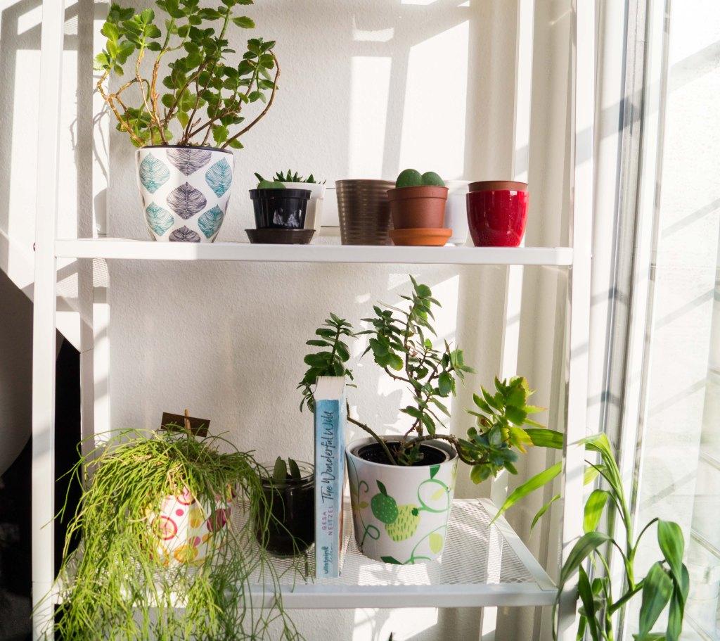 Gesa Neitzels Buch mit Pflanzen